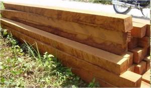 Investasi kayu jabon 2
