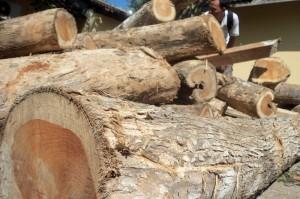 Investasi kayu jati 1